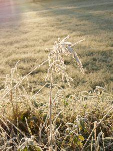 von Raureif überzogenes Gras
